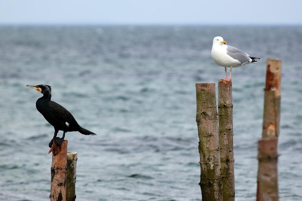 Vogel an wasser